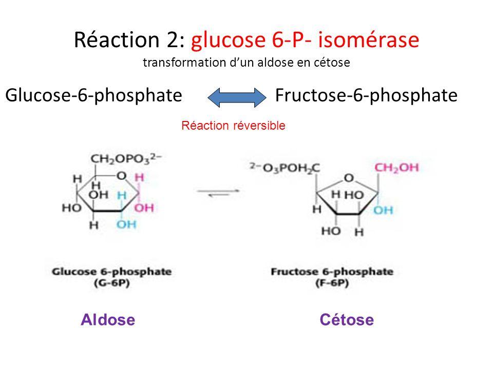 Réaction 2: glucose 6-P- isomérase transformation dun aldose en cétose Glucose-6-phosphateFructose-6-phosphate Réaction réversible AldoseCétose