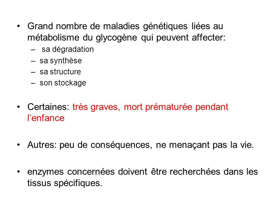 Grand nombre de maladies génétiques liées au métabolisme du glycogène qui peuvent affecter: – sa dégradation –sa synthèse –sa structure –son stockage