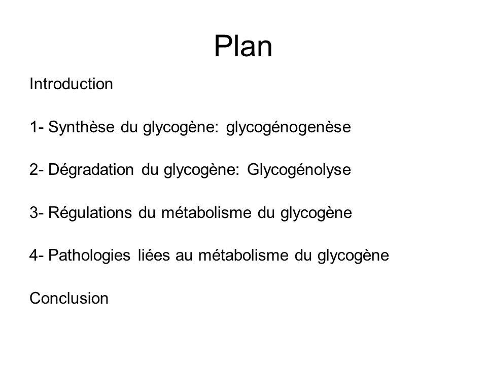 Introduction Glycogène: homopolymère de glucose avec: –Chaîne linéaire: liaison glucosidique intra-chaîne α 1-4 –Chaîne ramifiée: liaison glucosidique inter-chaîne α 1-6 (environ tous les 10 résidus) -Une extrémité réductrice (extrémité avec le groupe hydroxyle OH sur C1 libre)
