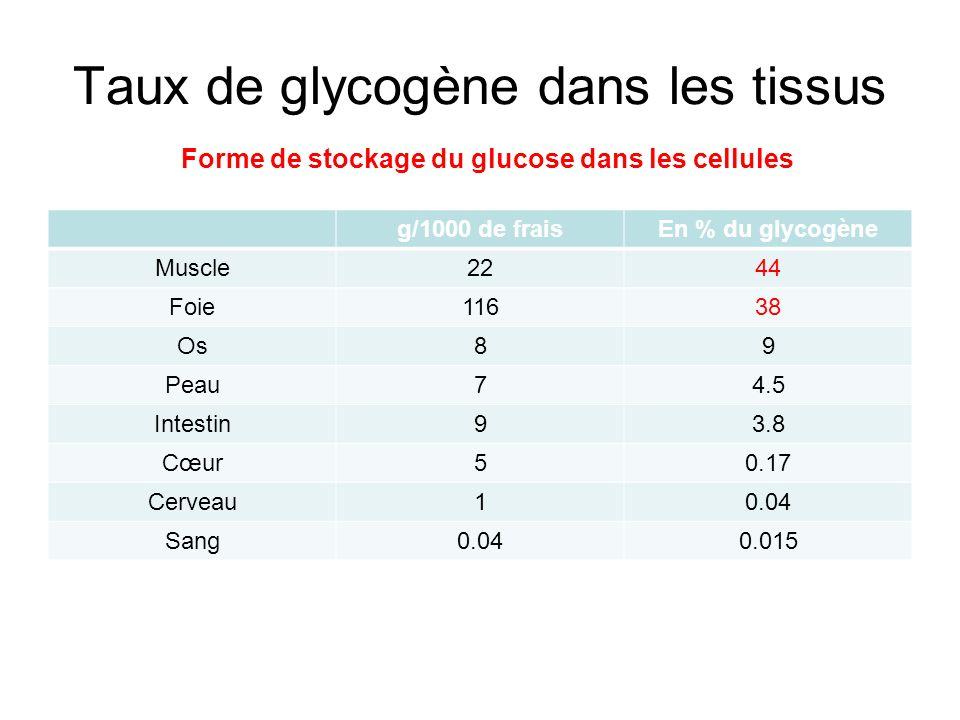 Métabolisme du glycogène Catabolisme: glucose 1P ou en glucose –À partir du glycogène alimentaire (exogène) –À partir du glycogène endogène tissulaire: glycogénolyse Synthèse tissulaire à partir de glucose:glycogénogenèse Sites du métabolisme: –Intestin: site du catabolisme du glycogène exogène –Foie: Période post-prandiale: glycogénogenèse À distance dun repas: glycogénolyse, glucose exporté vers tissus –Muscles: Au repos: glycogénogenèse En activité: glycogénolyse, glucose utilisé sur place