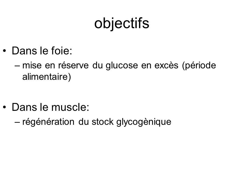 objectifs Dans le foie: –mise en réserve du glucose en excès (période alimentaire) Dans le muscle: –régénération du stock glycogènique