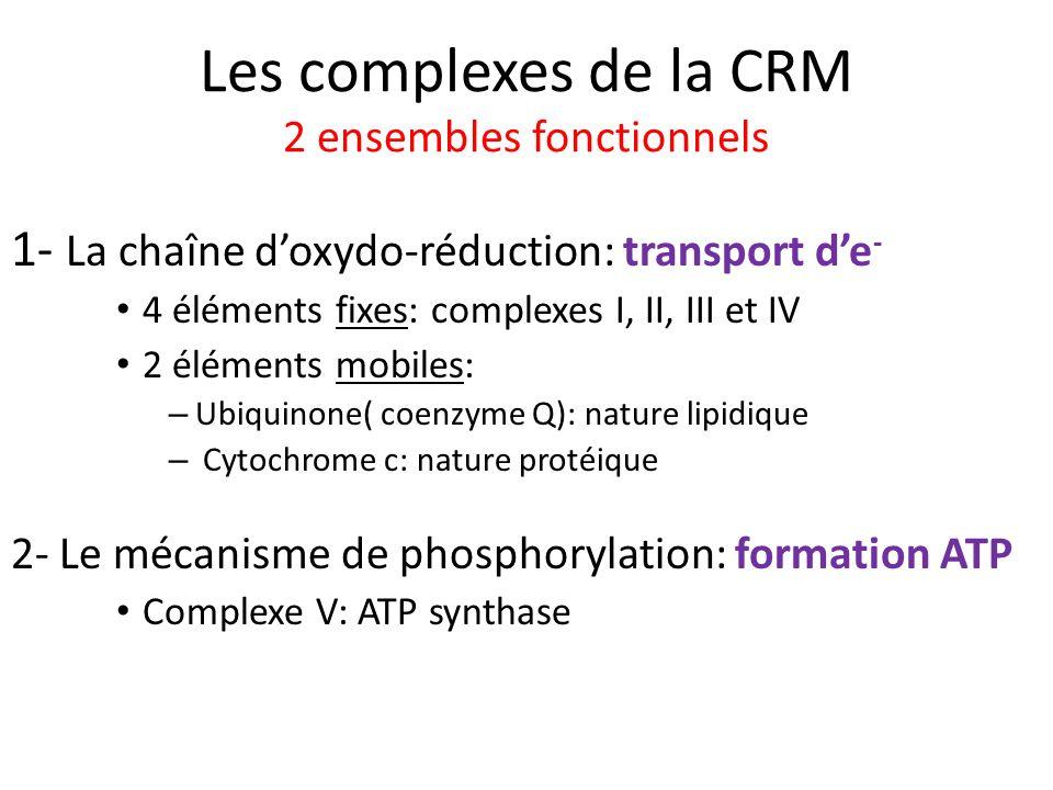 Les complexes de la CRM 2 ensembles fonctionnels 1- La chaîne doxydo-réduction: transport de - 4 éléments fixes: complexes I, II, III et IV 2 éléments