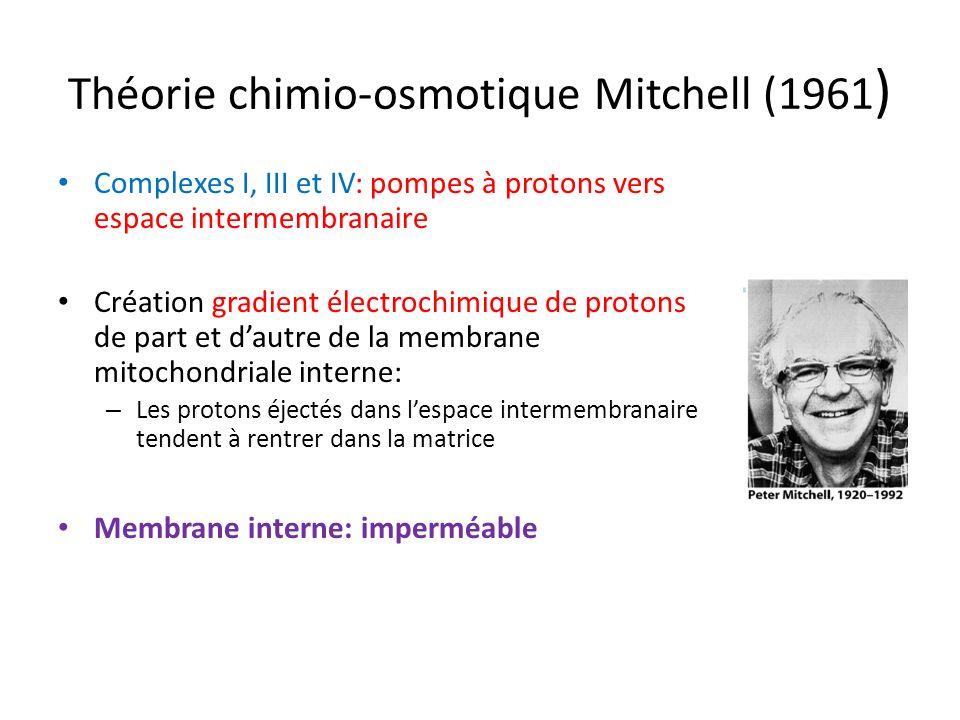Théorie chimio-osmotique Mitchell (1961 ) Complexes I, III et IV: pompes à protons vers espace intermembranaire Création gradient électrochimique de p