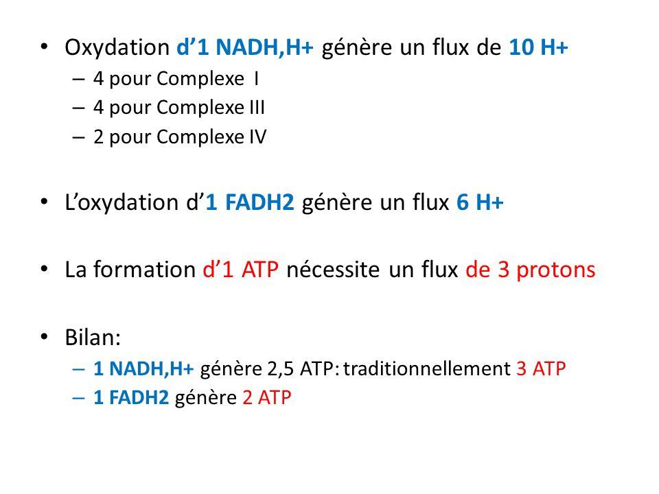 Oxydation d1 NADH,H+ génère un flux de 10 H+ – 4 pour Complexe I – 4 pour Complexe III – 2 pour Complexe IV Loxydation d1 FADH2 génère un flux 6 H+ La