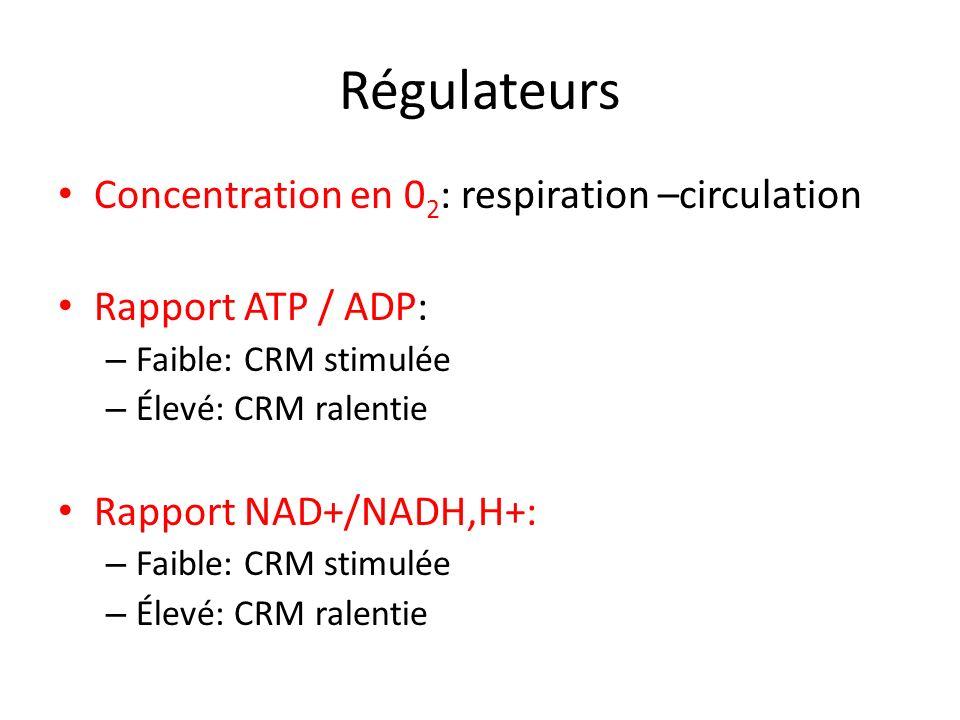 Régulateurs Concentration en 0 2 : respiration –circulation Rapport ATP / ADP: – Faible: CRM stimulée – Élevé: CRM ralentie Rapport NAD+/NADH,H+: – Fa