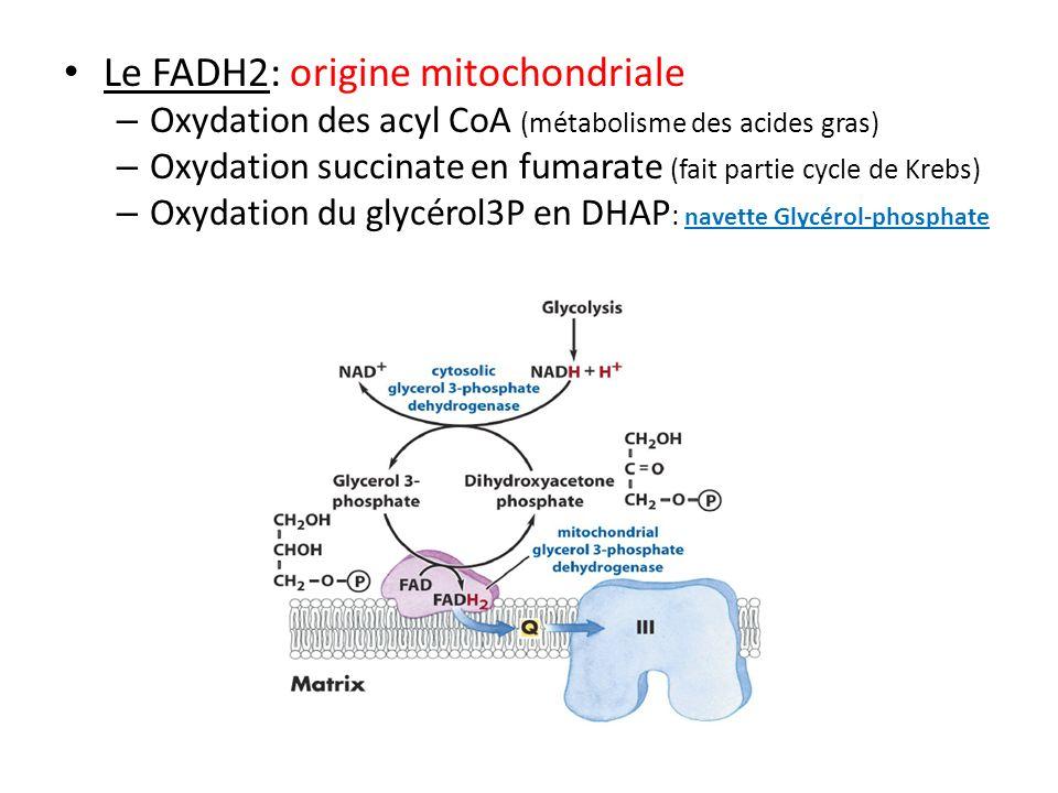 Le NADH,H+: – origine mitochondriale: Cycle de Krebs, oxydation du Pyruvate, β oxydation AG – origine cytosolique: Ne peut traverser membrane mitochondriale oxydation de divers substrats: PGA, lactate… navette Malate-Aspartate