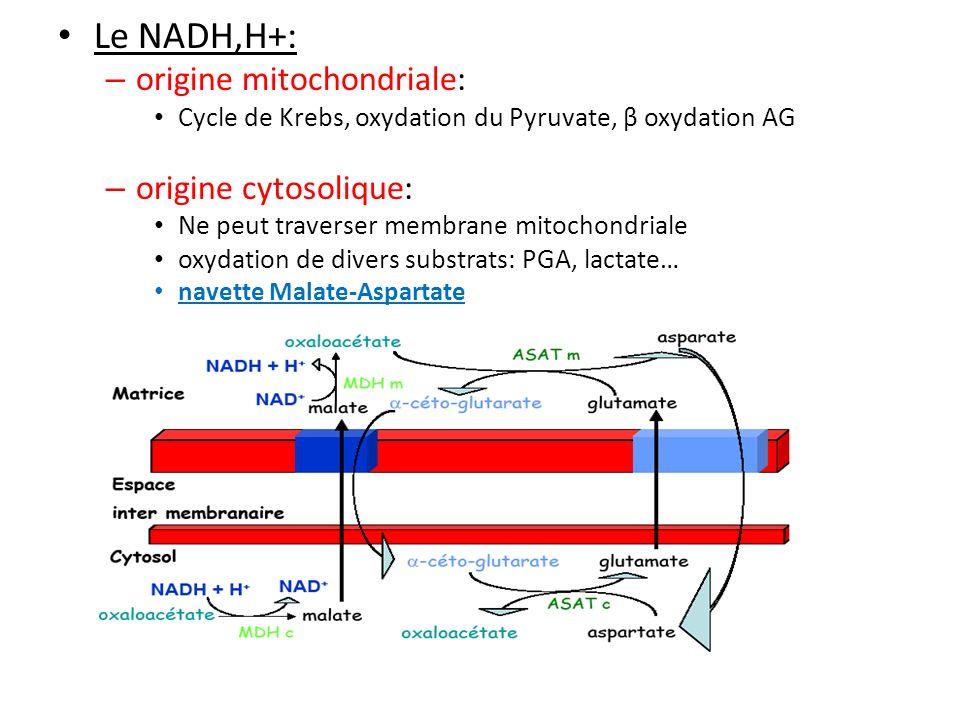 II- La CRM 2- Les complexes de transport délectrons