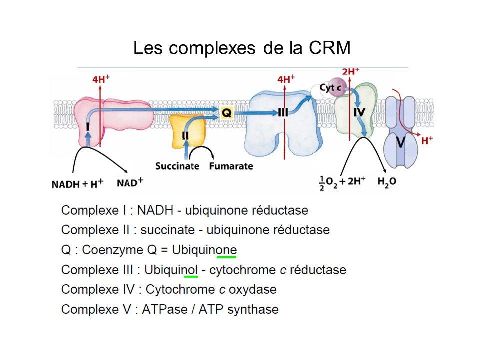 Les complexes de la CRM 2 ensembles fonctionnels 1- La chaîne doxydo-réduction: transport de - 4 éléments fixes: complexes I, II, III et IV 2 éléments mobiles: – Ubiquinone( coenzyme Q): nature lipidique – Cytochrome c: nature protéique 2- Le mécanisme de phosphorylation: formation ATP Complexe V: ATP synthase