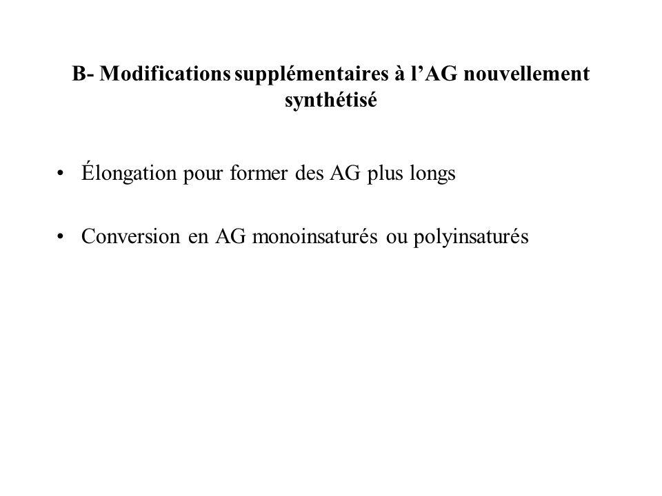 B- Modifications supplémentaires à lAG nouvellement synthétisé Élongation pour former des AG plus longs Conversion en AG monoinsaturés ou polyinsaturés
