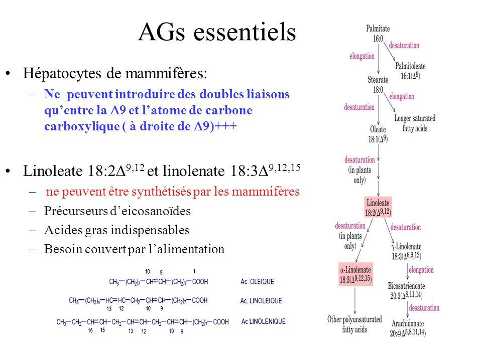 Hépatocytes de mammifères: –Ne peuvent introduire des doubles liaisons quentre la 9 et latome de carbone carboxylique ( à droite de 9)+++ Linoleate 18:2 9,12 et linolenate 18:3 9,12,15 – ne peuvent être synthétisés par les mammifères –Précurseurs deicosanoïdes –Acides gras indispensables –Besoin couvert par lalimentation AGs essentiels