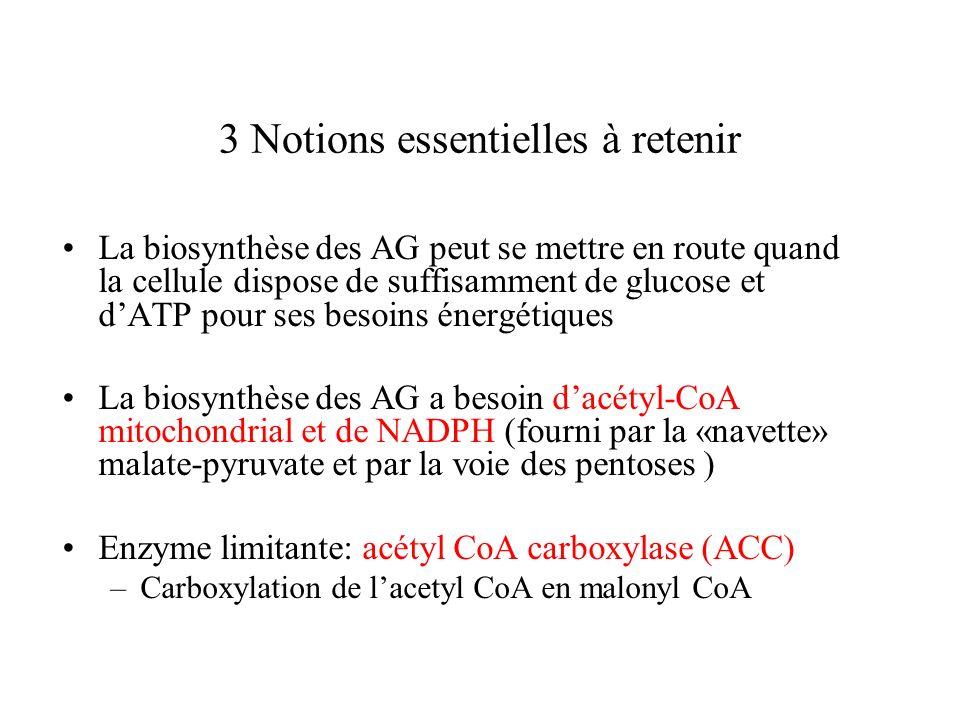 3 Notions essentielles à retenir La biosynthèse des AG peut se mettre en route quand la cellule dispose de suffisamment de glucose et dATP pour ses besoins énergétiques La biosynthèse des AG a besoin dacétyl-CoA mitochondrial et de NADPH (fourni par la «navette» malate-pyruvate et par la voie des pentoses ) Enzyme limitante: acétyl CoA carboxylase (ACC) –Carboxylation de lacetyl CoA en malonyl CoA