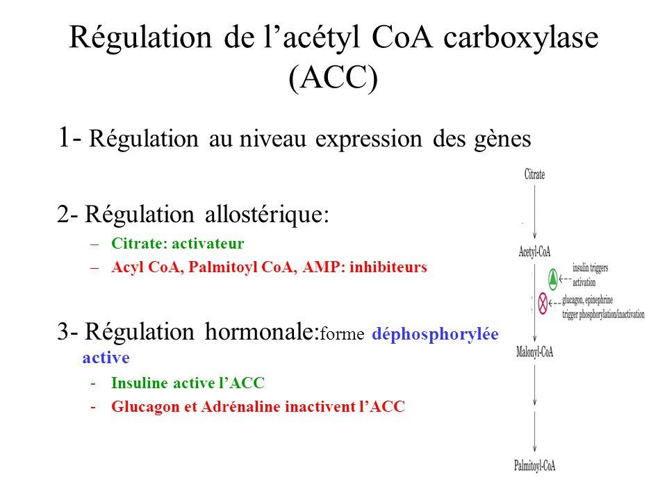 Régulation de lacétyl CoA carboxylase (ACC) 1- Régulation au niveau expression des gènes 2- Régulation allostérique: –Citrate: activateur –Acyl CoA, Palmitoyl CoA, AMP: inhibiteurs 3- Régulation hormonale: forme déphosphorylée active -Insuline active lACC -Glucagon et Adrénaline inactivent lACC