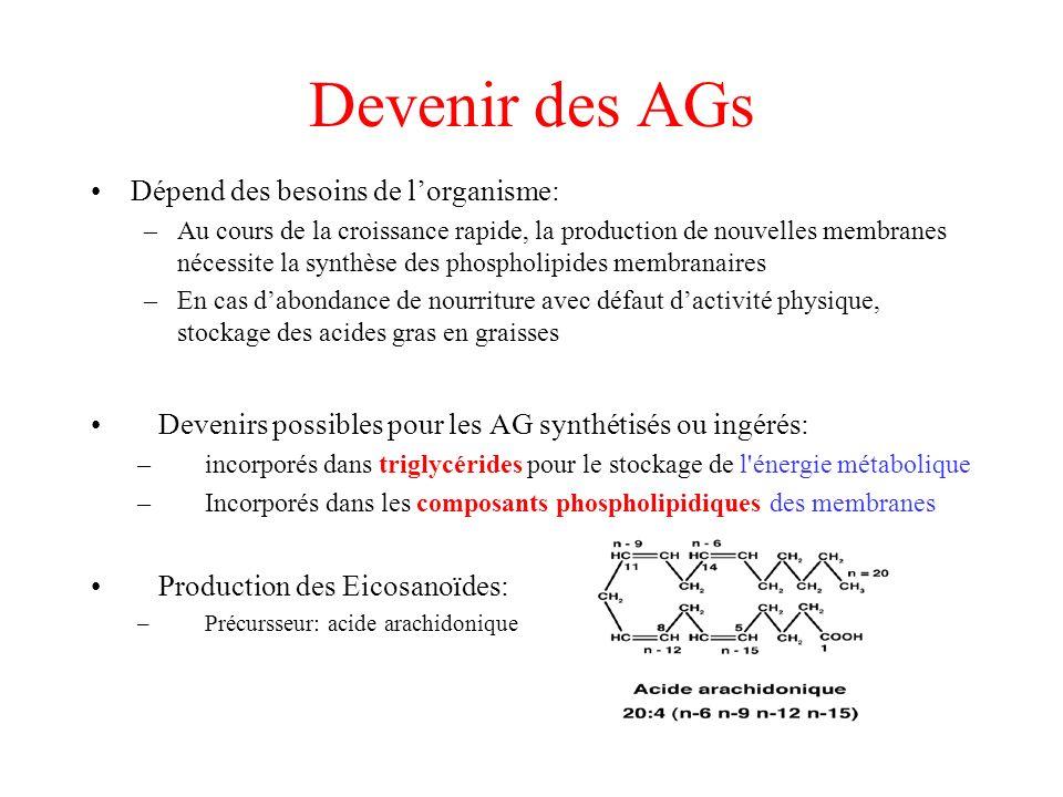 Devenir des AGs Dépend des besoins de lorganisme: –Au cours de la croissance rapide, la production de nouvelles membranes nécessite la synthèse des phospholipides membranaires –En cas dabondance de nourriture avec défaut dactivité physique, stockage des acides gras en graisses Devenirs possibles pour les AG synthétisés ou ingérés: –incorporés dans triglycérides pour le stockage de l énergie métabolique –Incorporés dans les composants phospholipidiques des membranes Production des Eicosanoïdes: –Précursseur: acide arachidonique