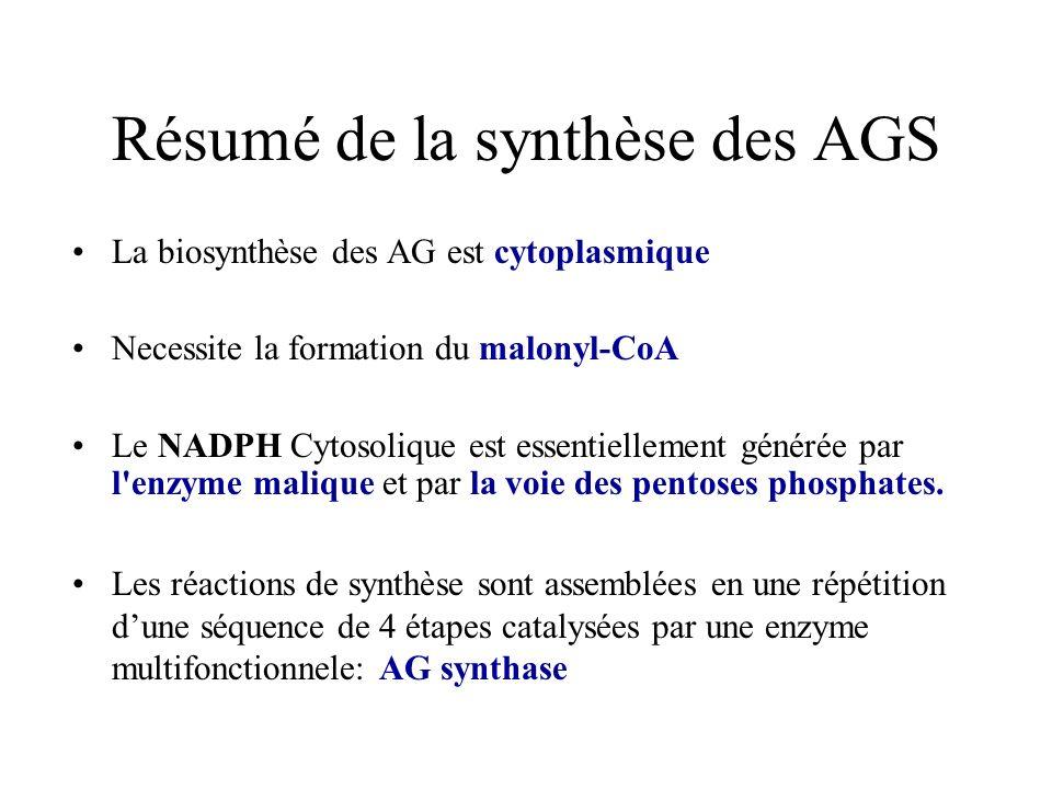 Résumé de la synthèse des AGS La biosynthèse des AG est cytoplasmique Necessite la formation du malonyl-CoA Le NADPH Cytosolique est essentiellement générée par l enzyme malique et par la voie des pentoses phosphates.