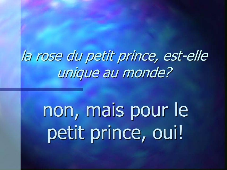 la rose du petit prince, est-elle unique au monde? non, mais pour le petit prince, oui!
