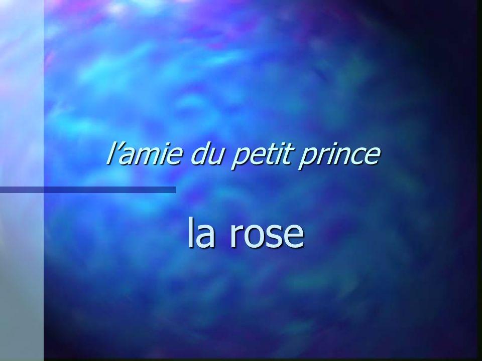 lamie du petit prince la rose