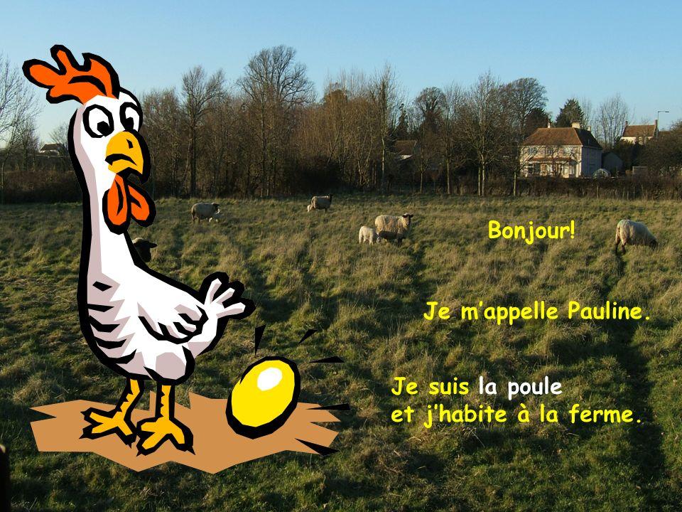 Je suis la poule et jhabite à la ferme. Je mappelle Pauline. Bonjour!
