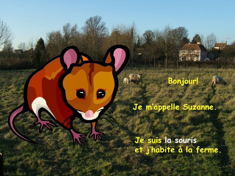 Je suis la souris et jhabite à la ferme. Je mappelle Suzanne. Bonjour!