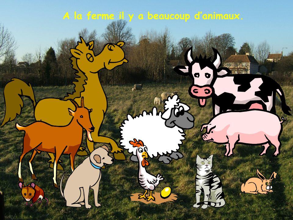 Bonjour! Je mappelle Violette. Je suis la vache et jhabite à la ferme.