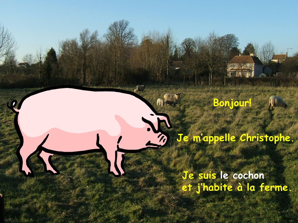 Bonjour! Je mappelle Christophe. Je suis le cochon et jhabite à la ferme.