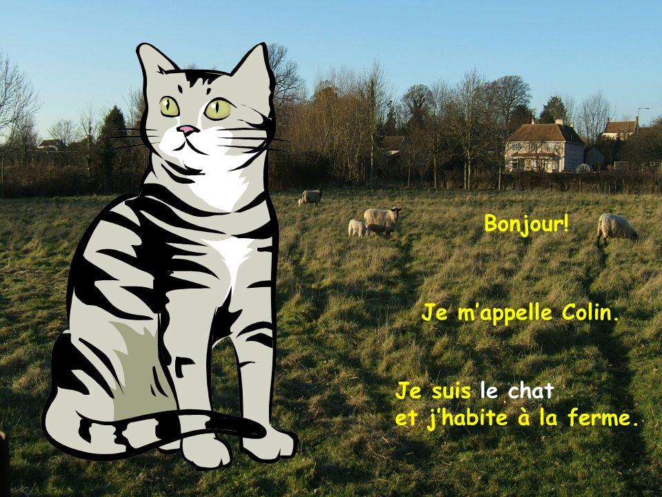 Je suis le chat et jhabite à la ferme. Je mappelle Colin. Bonjour!