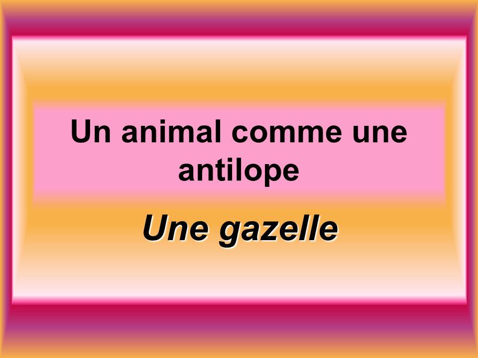 Un animal comme une antilope Une gazelle