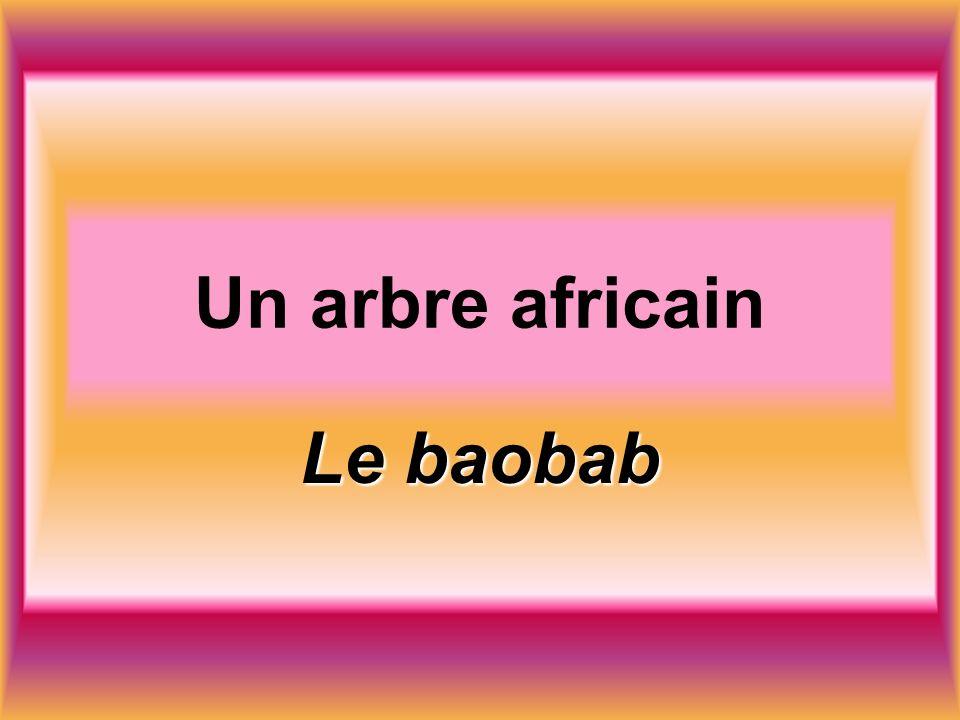 Un arbre africain Le baobab
