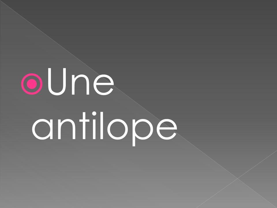 Une antilope