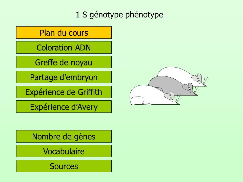 1 S génotype phénotype Partage dembryon Greffe de noyau Expérience de Griffith Coloration ADN Expérience dAvery Sources Vocabulaire Plan du cours Nomb