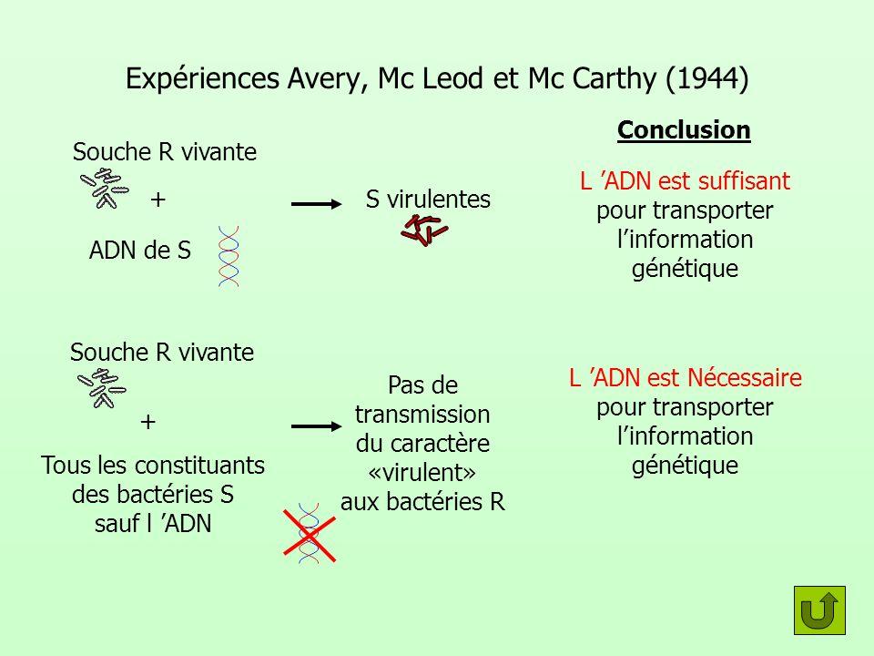 Expériences Avery, Mc Leod et Mc Carthy (1944) Souche R vivante Conclusion L ADN est suffisant pour transporter linformation génétique Pas de transmis