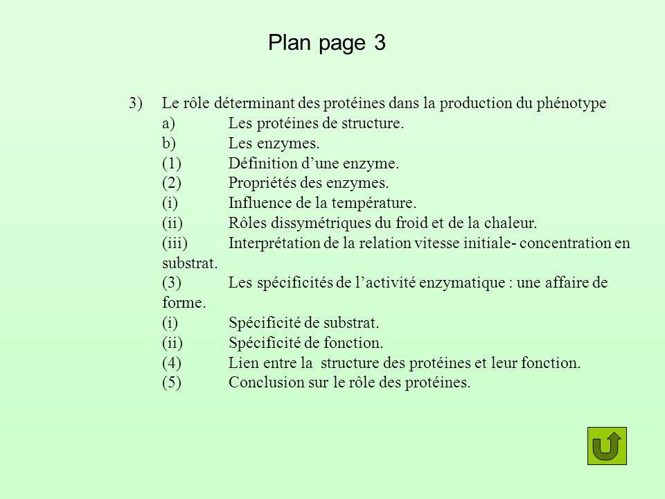 Plan page 3 3)Le rôle déterminant des protéines dans la production du phénotype a)Les protéines de structure. b)Les enzymes. (1)Définition dune enzyme