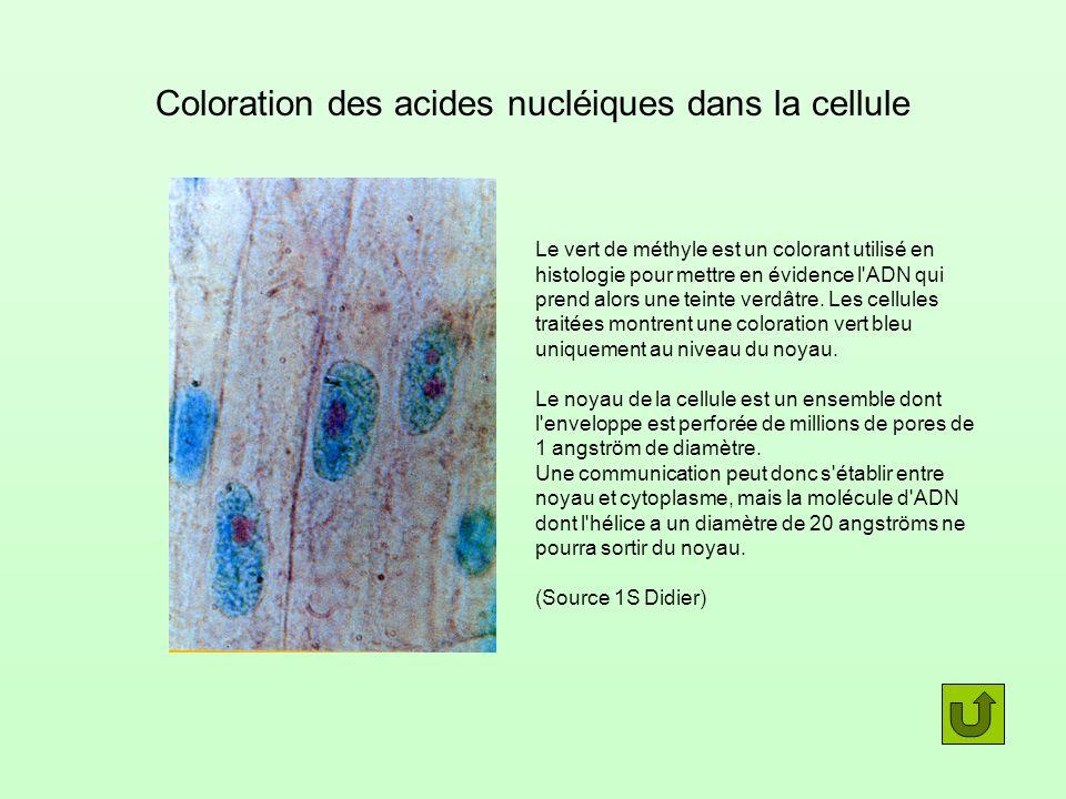 Transfert de noyau OvuleSpermatozoïde Œuf La souris fille a le phénotype des souris ayant donné le noyau LIG est contenue dans le noyau cellulaire