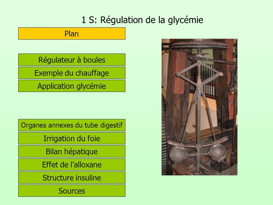 1 S: Régulation de la glycémie Exemple du chauffage Plan Organes annexes du tube digestif Régulateur à boules Irrigation du foie Effet de lalloxane St