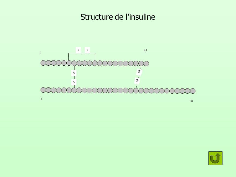 Structure de linsuline