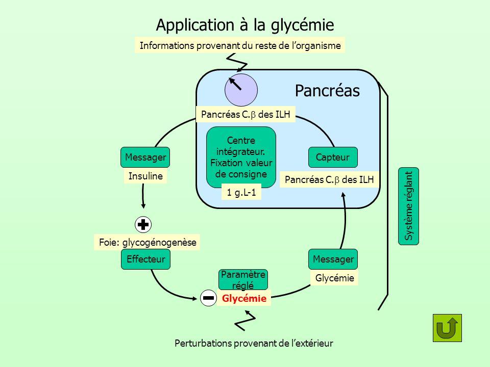 Pancréas Application à la glycémie Centre intégrateur. Fixation valeur de consigne Capteur Pancréas C. des ILH Foie: glycogénogenèse Glycémie Perturba