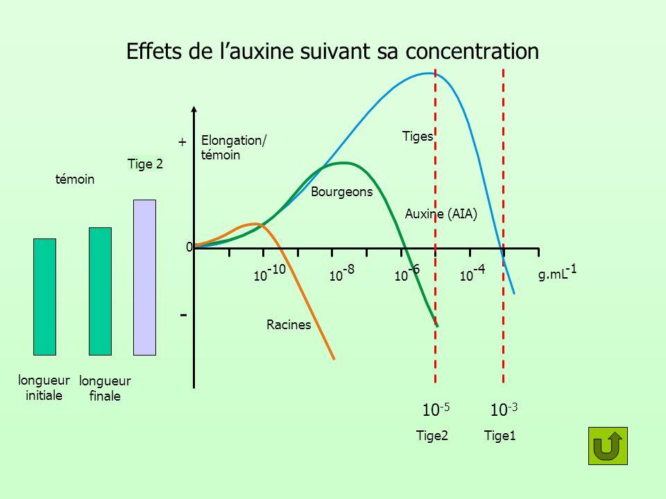 Tige 1 10 -3 Tige1 Effets de lauxine suivant sa concentration témoin 0 Racines Bourgeons Tiges Auxine (AIA) g.mL 10 -10 10 -8 10 -6 10 -4 Elongation/