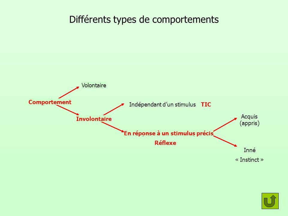 Différents types de comportements Réflexe TIC « Instinct » En réponse à un stimulus précis Indépendant dun stimulus Volontaire Involontaire Inné Acqui