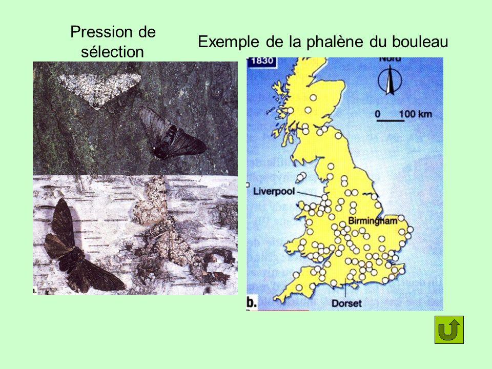 Pression de sélection Exemple de la phalène du bouleau