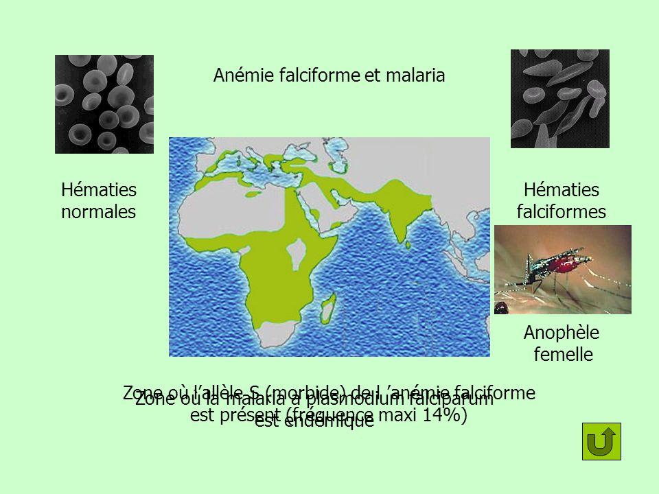 Anémie falciforme et malaria Zone où la malaria à plasmodium falciparum est endémique Zone où lallèle S (morbide) de l anémie falciforme est présent (