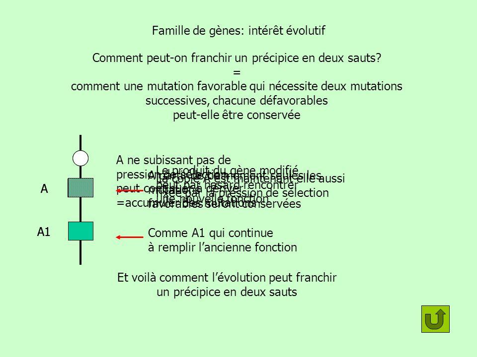 Famille de gènes: intérêt évolutif A A1 A ne subissant pas de pression de sélection peut continuer à dériver =accumuler des mutations A A1 Le produit