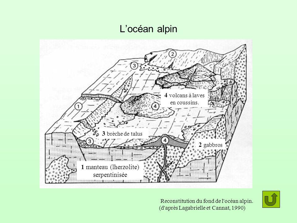 Locéan alpin 1 manteau (lherzolite) serpentinisée 2 gabbros 3 brèche de talus 4 volcans à laves en coussins. Reconstitution du fond de l'océan alpin.