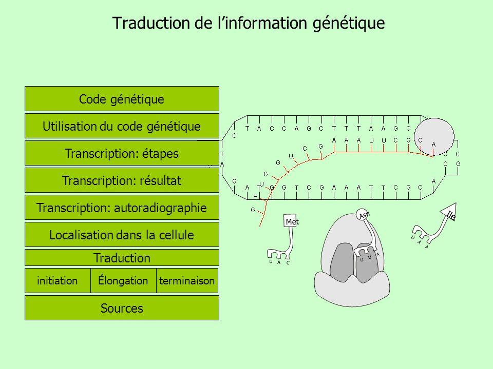 Traduction de linformation génétique Code génétique Utilisation du code génétique Transcription: étapes Transcription: résultat Transcription: autorad