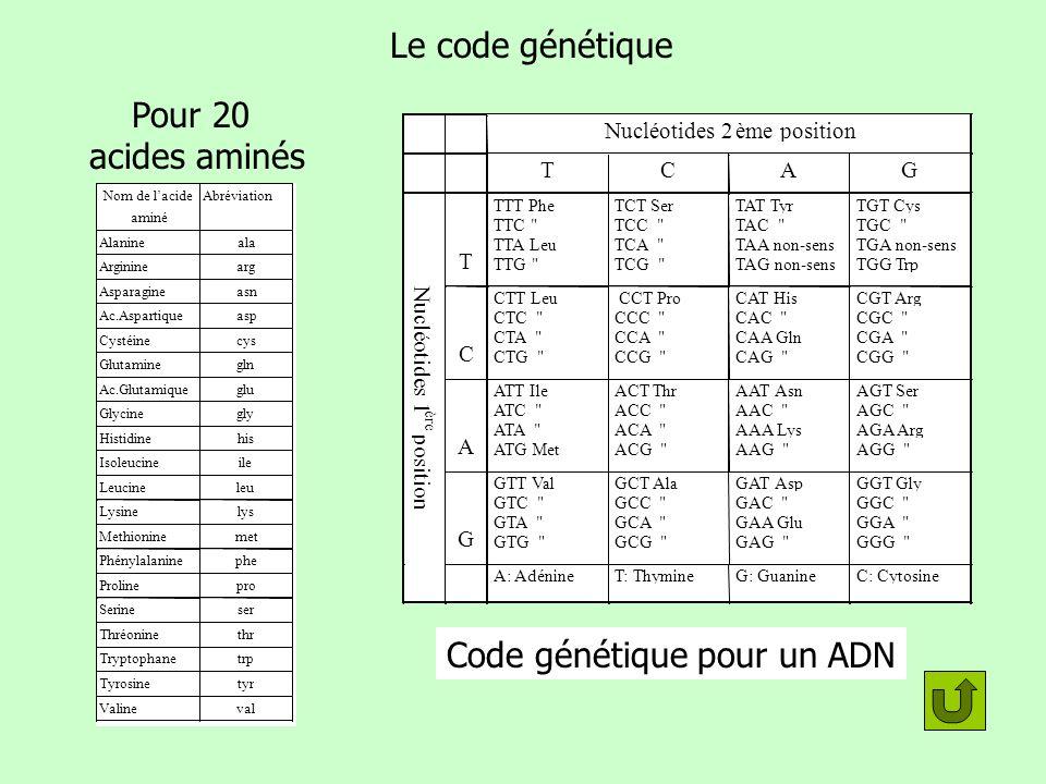 Le code génétique 64 codons Pour 20 acides aminés Nom de lacide aminé Abréviation Alanineala Argininearg Asparagineasn Ac.Aspartiqueasp Cystéinecys Gl