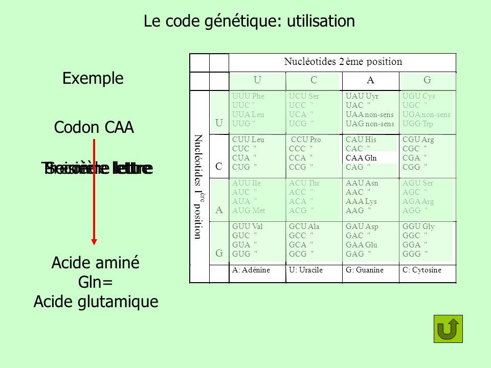Le code génétique: utilisation Exemple Codon CAA Première lettreSeconde lettreTroisième lettre Acide aminé Gln= Acide glutamique