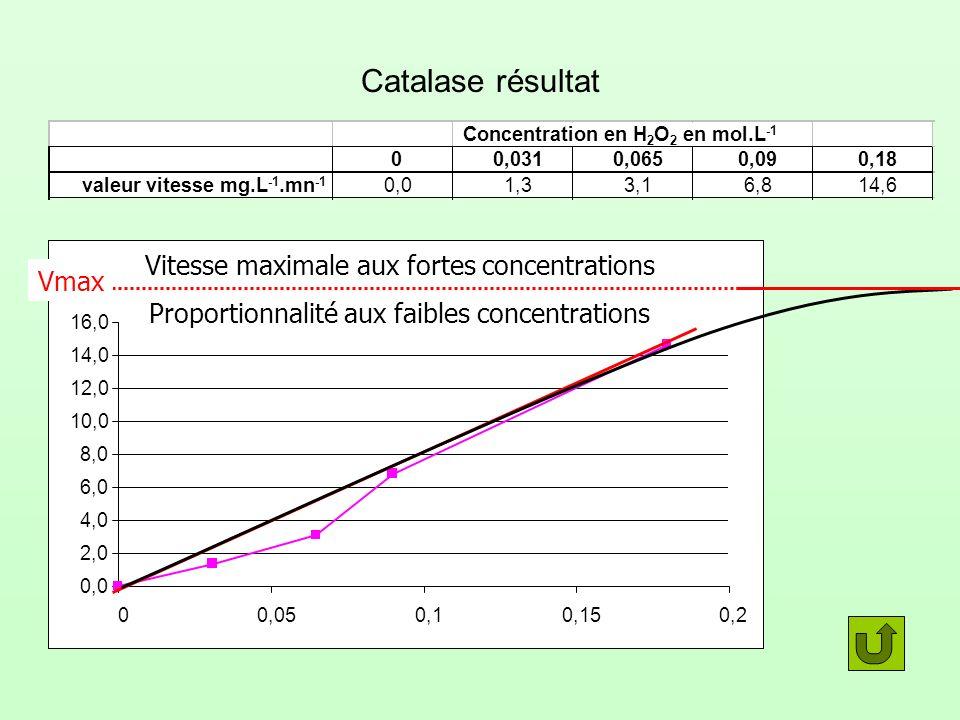 Pepsine fixée sur une molécule de substrat Pepsine Substrat Site actif