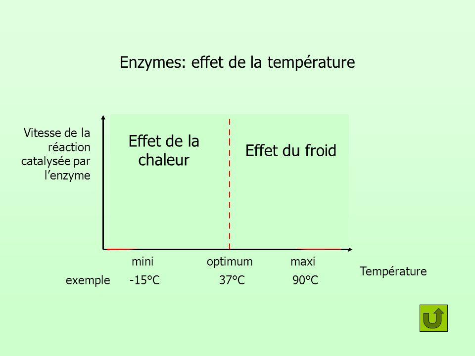 Enzymes: effet de la température Vitesse de la réaction catalysée par lenzyme Température minimaxioptimum Effet du froid Effet de la chaleur -15°C90°C37°Cexemple