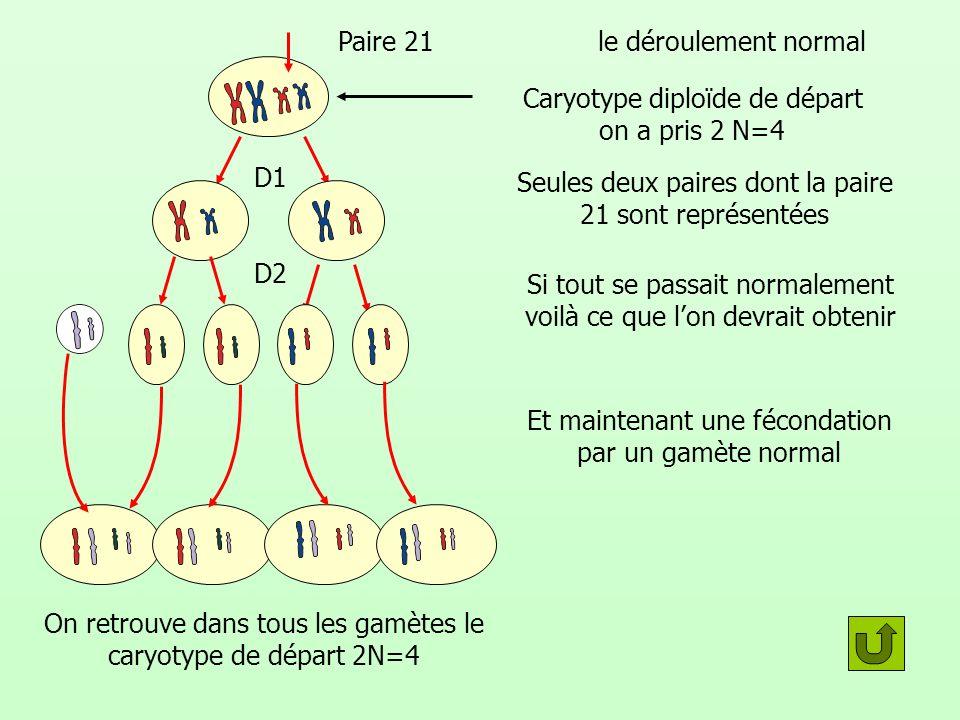 le déroulement normal Seules deux paires dont la paire 21 sont représentées Si tout se passait normalement voilà ce que lon devrait obtenir D1 D2 Et m