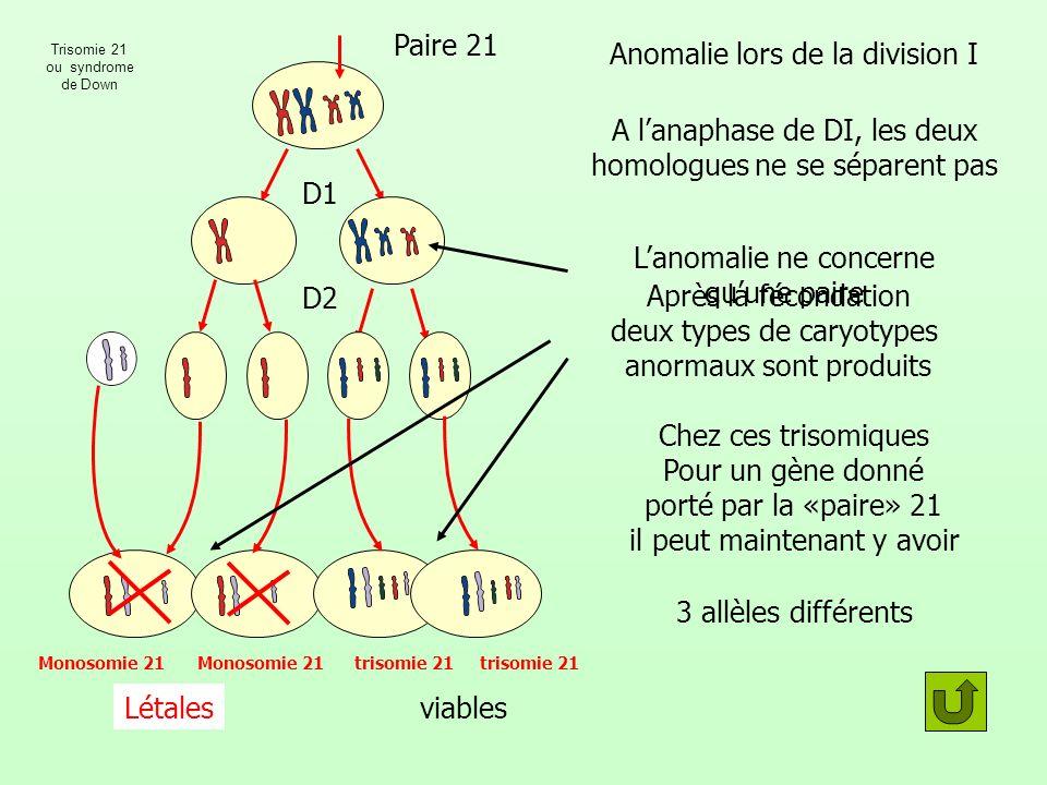 Après la fécondation deux types de caryotypes anormaux sont produits Anomalie lors de la division I D1 D2 Paire 21 Monosomie 21 trisomie 21 Létalesvia