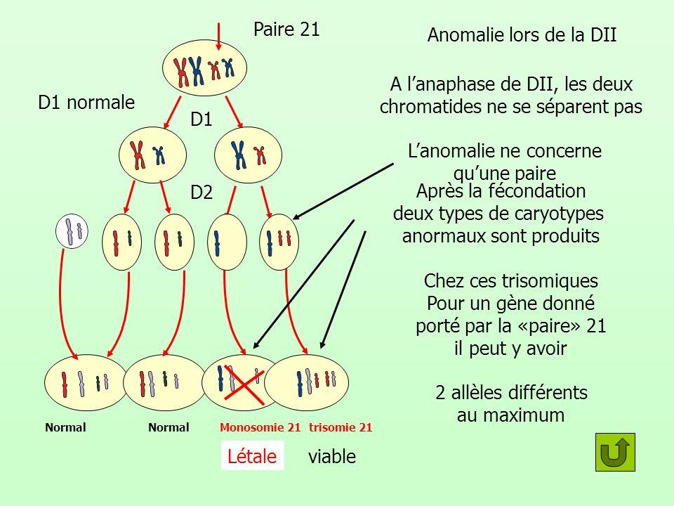 Après la fécondation deux types de caryotypes anormaux sont produits Anomalie lors de la DII Paire 21 Normal Monosomie 21trisomie 21 Létaleviable Lano