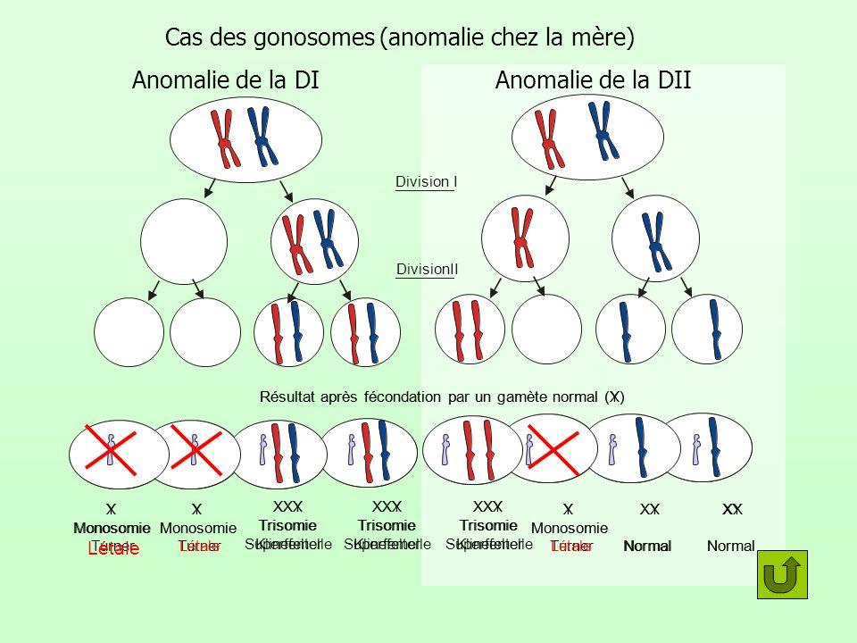 Cas des gonosomes (anomalie chez la mère) Division I DivisionII Résultat après fécondation par un gamète normal (X) X Monosomie Turner X Monosomie Tur